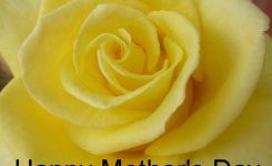 Mother's Day – Shepherd Of The Valley Lutheran Church