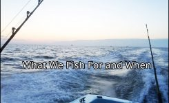 Outer Banks Fishing Charters: Deep Sea Fish We Catch