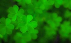 Saint Patrick's Day 2020 And 2021 – Publicholidays
