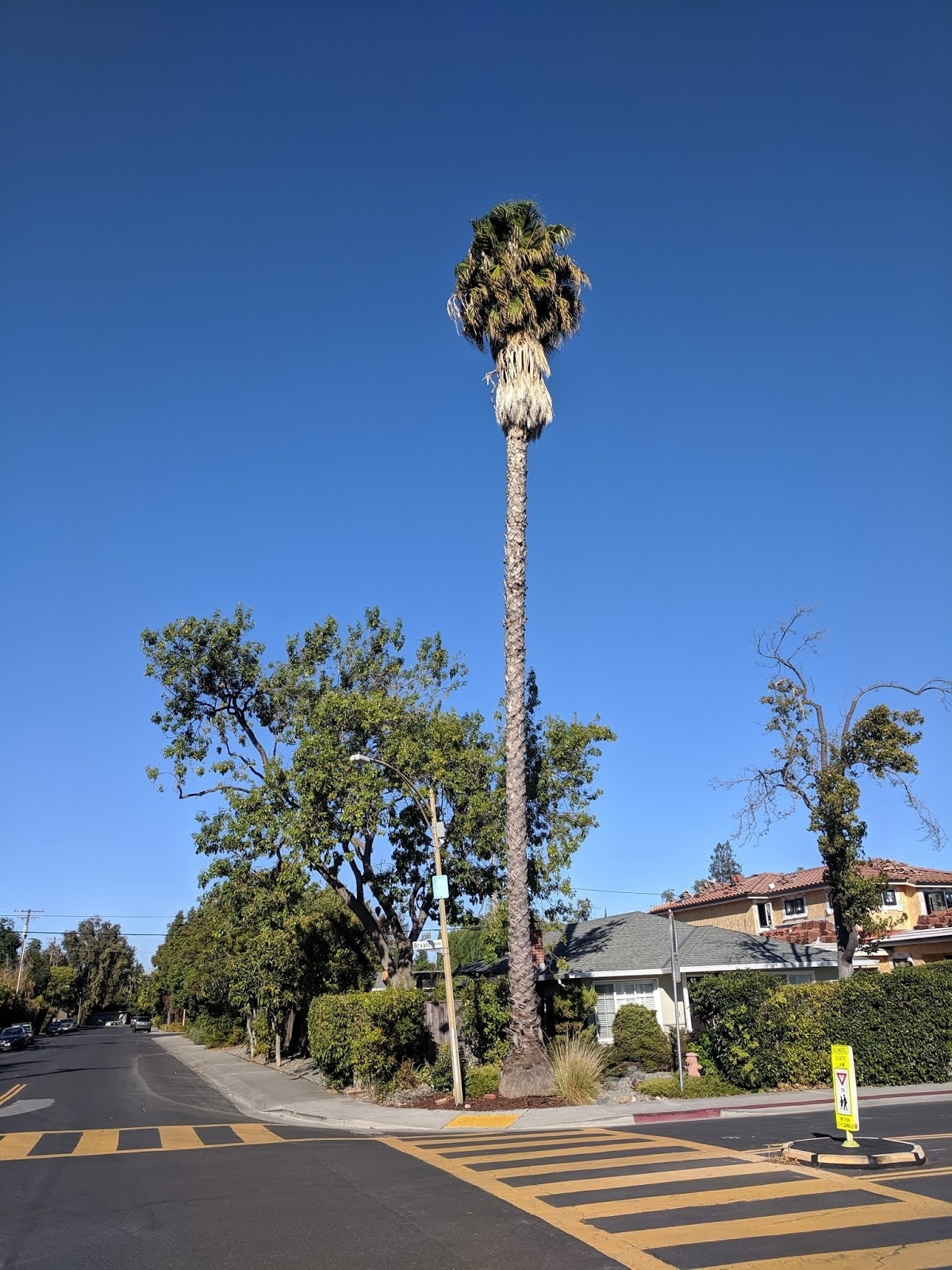 Searchresearch: Answer: Why Are Palm Trees So Tall?